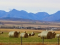 Pincher Creek Area Farm and Ranch Lands 2015 10 23 IMG_3464