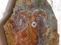 THE GUARDIAN - Rocky Mountain Big Horn Sheep - C14