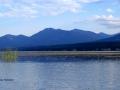 Columbia Lake - Golden Aquatic Leaves 2015 08 08 IMG_6226