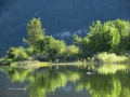 Columbia Lake NE Green Reflections 2015 06 22 lIMG_4776