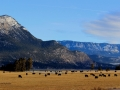Columbia Lake Ranch Country 2016 02 07 IMG_5073