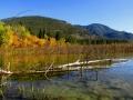 Fallen Birch Reflections - Columbia Lake Prov Park Shores 2015 09 28 IMG_6904