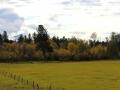 October Pastoral near Wasa BC 2013 10 02 IMG_5797