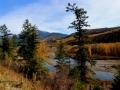 Elk River BC October Splendor 2015 10 23 IMG_3263