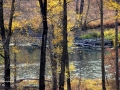 Elk River BC Autumn Leaves 2015 10 23 IMG_3276