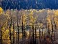 Elk River BC Stunning Fall Foliage 2015 10 23 IMG_3280