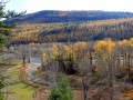 Elk River Valley October Larch 2015 10 23 IMG_3308