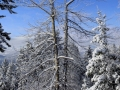 Snow Covered Trees Panorama from Fairmont Ski Hill 2014 12 02 Stitch IMGS 6657-58