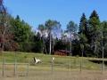 Horses Near Findlay Creek Cabin   2013 09 19  IMG_4838