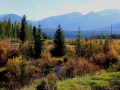 Lavington Creek October Splendor- Purcell Mountains Background - Trim  IMG_6284