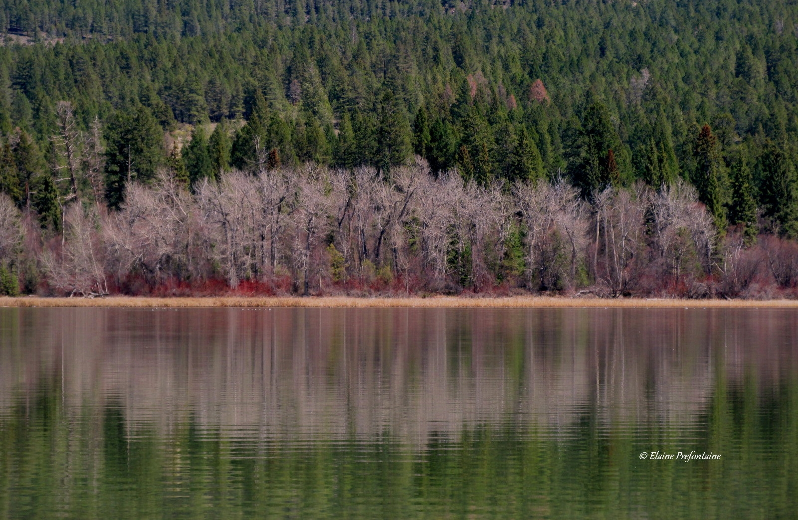 Columbia-Lake-Provincial-Park-Reflections-2019-04-21-IMG_3508