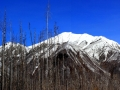 Kootenay National Park - Stark Contrasts Burned Trees and Snow - 2013 05 04 Stitch IMGS 1976-77