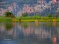 Deer Family Play in Evening Wetlands 2015 08 12 IMG_6373