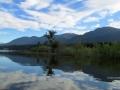 Columbia Lake - Eagle Tree in Morning 2016 06 04 IMG_7686