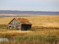Homestead West of Moose Jaw Saskatchewan  2014 10 08  Trim IMG_5664
