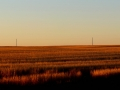 Prairie Field Sunset Shadows - From Hwy 4 North of Swift Current 2016 09 25 IMG_7748