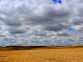Beautiful Big Sky Farmland - SW of Rockglen 2014 05 18 Trm IMG_9492