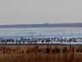 Reed Lake Waterfowl Migration 2013 10 14 IMG_6586