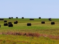 Saskatchewan - Bales and Big Skies IMG_8052