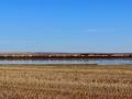 Reed Lake Saskatchewan - CP Rail and Snow Geese 2016 09 16 IMG_7953