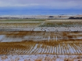 October Snow on Prairie Fields 2016 10 11 IMG_8114