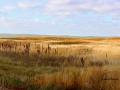 Reed Lake Fall Grasses 2014 10 17 IMG_6048.jpg