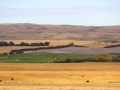 Rolling Hills Lands West of Moose Jaw Sask 2014 10 08 Trim IMG_5653.jpg