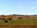 Rolling Hills and Pasture Land - North of Scout Lake, Saskatchewan 2014 10 12 Stitch IMGS 5681-2