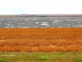 Wind and Whitecaps - Beside Hwy 2 South of Assiniboia - 2015 10 11 IMG_2625