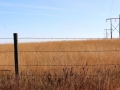 Hay Fields, Barbwire and Telephone Poles - West of Moose Jaw, Sask 2014 10 17 IMG_5895