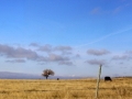 Pastoral Setting - West of Moose Jaw 2014 10 17 Stitch IMGS 5891-93