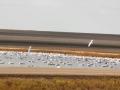 Reed Lake October Bird Migration 2014 10 17 Trimmed IMG_6058