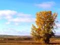 Beautiful Prairie Homestead Tree In Fall 2014 10 17 IMG_5918