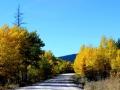 Findlay Creek Forestry Road Fall Foliage 2013 10 06 IMG_6054