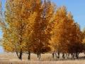 Saskatchewan Fall Splendor 2014 10 17 IMG_6083