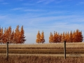 Stunning in Autumn - East of Gull Lake Saskatchewan 2014 10 17 IMG_6081