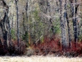 The Tangled Forest - Columbia Lake Prov Park - 2015.04.21 IMG_3406.jpg