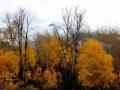 Orange October North of Wasa BC 2013 10 02 IMG_5837