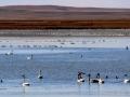 A Huge Waterfowl Migration - Reed Lake Saskatchewan - 2013 10 14 - IMG_6644